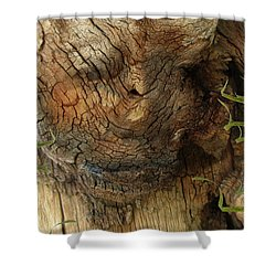 Shower Curtain featuring the photograph Tree Memories # 22 by Ed Hall