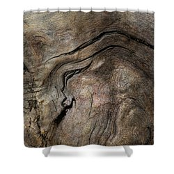 Shower Curtain featuring the photograph Tree Memories # 23 by Ed Hall