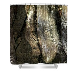 Shower Curtain featuring the photograph Tree Memories # 24 by Ed Hall