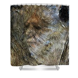 Shower Curtain featuring the photograph Tree Memories # 25 by Ed Hall