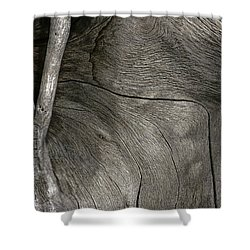 Shower Curtain featuring the photograph Tree Memories # 26 by Ed Hall