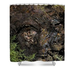 Shower Curtain featuring the photograph Tree Memories # 27 by Ed Hall