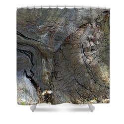 Shower Curtain featuring the photograph Tree Memories # 28 by Ed Hall