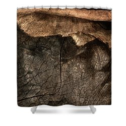 Shower Curtain featuring the photograph Tree Memories # 29 by Ed Hall
