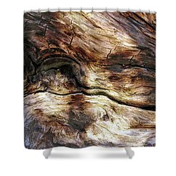 Shower Curtain featuring the photograph Tree Memories # 30 by Ed Hall