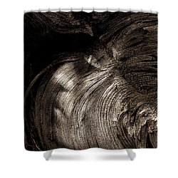 Shower Curtain featuring the photograph Tree Memories # 31 by Ed Hall