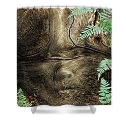 Shower Curtain featuring the photograph Tree Memories # 32 by Ed Hall