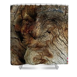 Shower Curtain featuring the photograph Tree Memories # 34 by Ed Hall