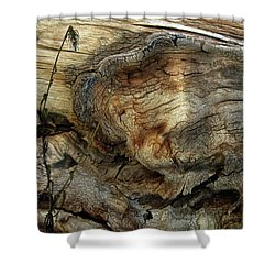 Shower Curtain featuring the photograph Tree Memories # 36 by Ed Hall