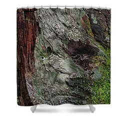 Shower Curtain featuring the photograph Tree Memories # 38 by Ed Hall