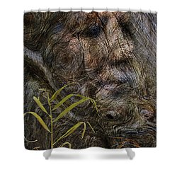 Shower Curtain featuring the photograph Tree Memories # 39 by Ed Hall