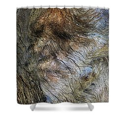 Shower Curtain featuring the photograph Tree Memories # 41 by Ed Hall