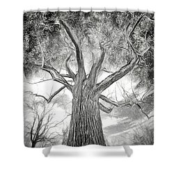 Tree Monster Bw Ap Shower Curtain