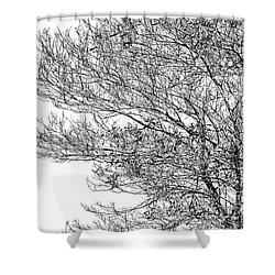 Tree No. 7-2 Shower Curtain