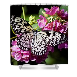 Tree Nymph Butterfly Shower Curtain