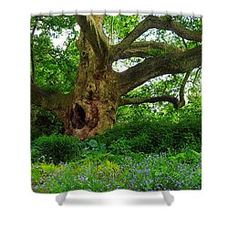 Tree Of Life Shower Curtain by Christian Slanec