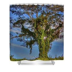 Tree Of Life Shower Curtain by Nadia Sanowar