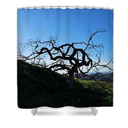 Shower Curtain featuring the photograph Tree Of Light - Landscape by Matt Harang