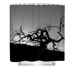 Tree Of Light Silhouette Hillside - Black And White  Shower Curtain