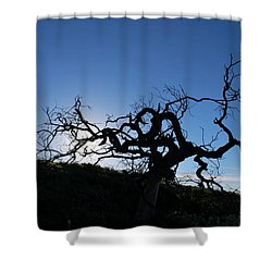 Shower Curtain featuring the photograph Tree Of Light Silhouette Hillside by Matt Harang