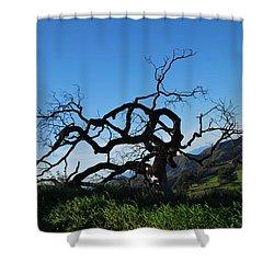Shower Curtain featuring the photograph Tree Of Light - Slanted Horizon by Matt Harang