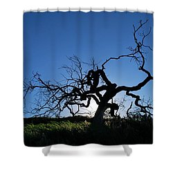 Shower Curtain featuring the photograph Tree Of Light - Straight View 2 by Matt Harang