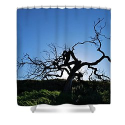 Shower Curtain featuring the photograph Tree Of Light - Straight View by Matt Harang