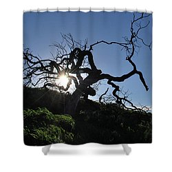 Shower Curtain featuring the photograph Tree Of Light - Sunshine Through Branches by Matt Harang