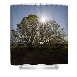 Tree Of The Night Shower Curtain