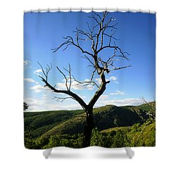 Tree Shower Curtain by Oliver Johnston