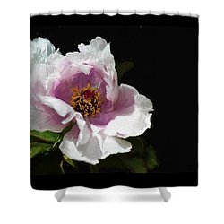 Tree Paeony II Shower Curtain
