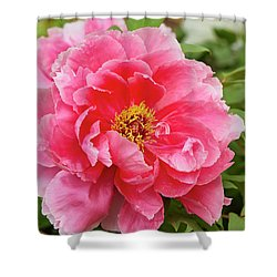 Tree Peony Shower Curtain