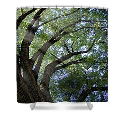 Tree Rays Shower Curtain