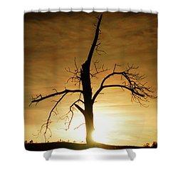 Tree Silhouette At Sundown Shower Curtain