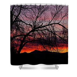 Tree Silhouette Shower Curtain by Paul Marto