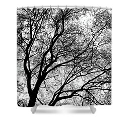 Tree Silhouette Series 1 Shower Curtain