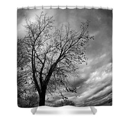 Tree 4 Shower Curtain by Simone Ochrym