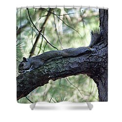 Shower Curtain featuring the photograph  Tree Squirrel by B Wayne Mullins