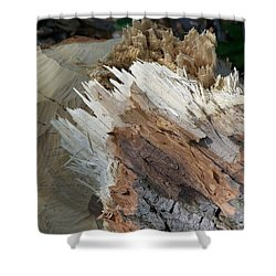 Tree Stump Shower Curtain