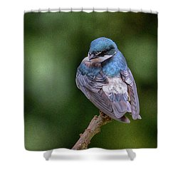 Shower Curtain featuring the photograph Tree Swallow In Costa Rica by John Haldane