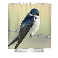 Shower Curtain featuring the photograph Tree Swallow by Jennie Marie Schell