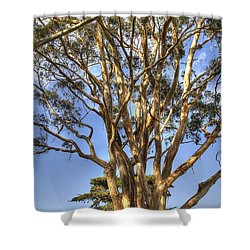 Tree To The Heavens Shower Curtain