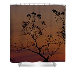 Tree Top After Sunset Shower Curtain by Donald C Morgan