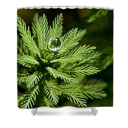 Tree Top Dew Drop Shower Curtain by Christopher Holmes