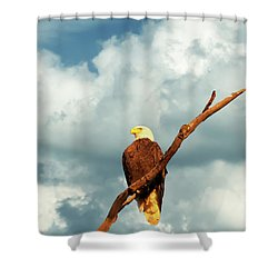 Tree Top Eagle  Shower Curtain