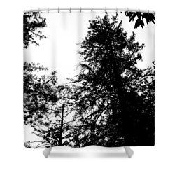 Tree Tops In Monotone Shower Curtain