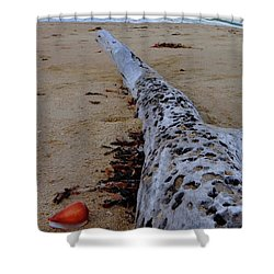 Tree Trunk And Shell On The Beach Full Size Shower Curtain