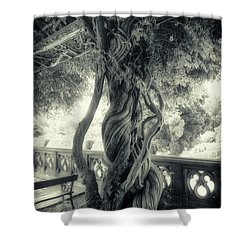 Tree Trunk Bw Series Y6693 Shower Curtain