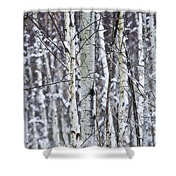 Tree Trunks Covered With Snow In Winter Shower Curtain by Elena Elisseeva