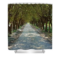 Shower Curtain featuring the photograph Tree Tunnel by Valentino Visentini